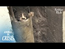 Kitten Reaches Out His Hand For People, Hoping They'd Save Him | Animal in Crisis EP119