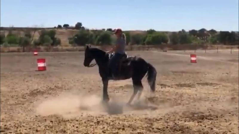 Martini ponyboy