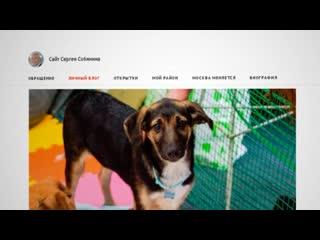 Волонтерам вновь разрешили посещать приюты для животных
