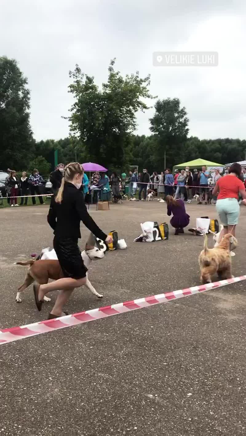 Всероссийская выставка собак ранга Ч РФЛС