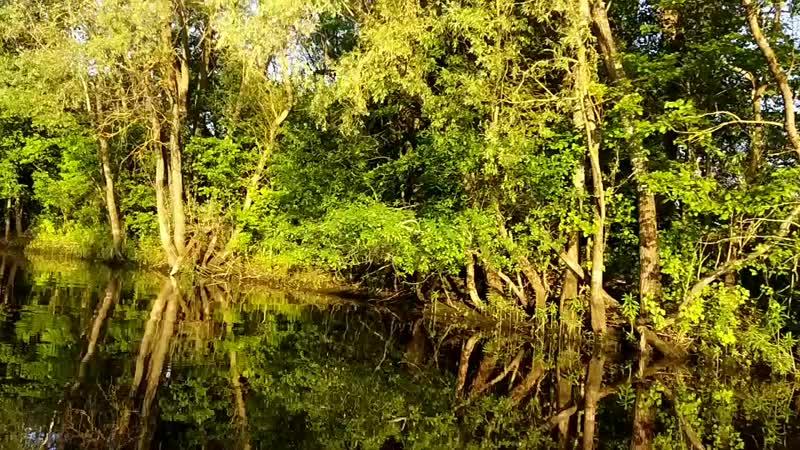Амазонка mp4