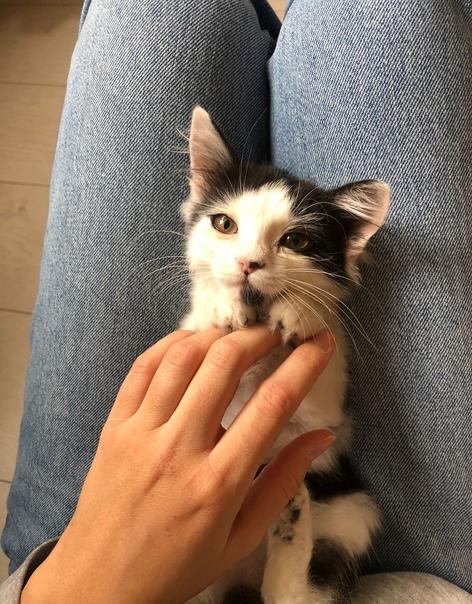 Срочно ищет хозяев маленький котеночек(девочка, 3 ...