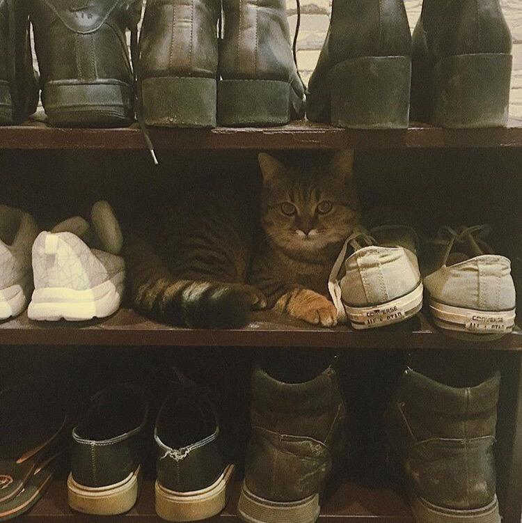 Мини-подборка антуражных котов