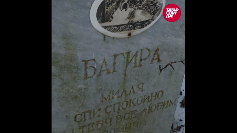 Кладбище домашних животных где хоронят собак и кошек в Казани