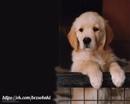 Самое любящее существо на свете — это собака.