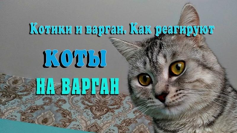 Котики и варган Посмотрите как коты реагируют на варган