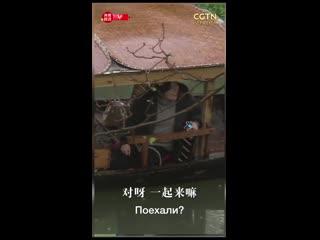 """Инспекционная поездка Си Цзиньпина в парке """"Западный ручей"""" в Ханчжоу"""