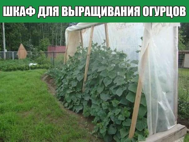 Шкаф для выращивания огурцов