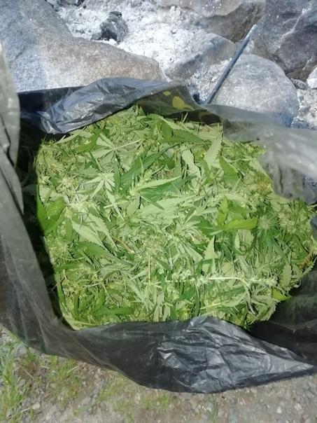 Поймали с мешком конопли значок марихуаны