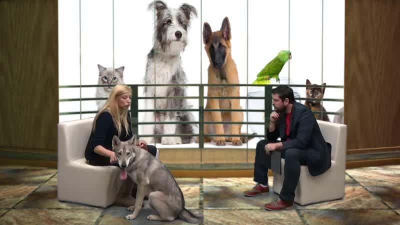 Pet Show 25 11 2015 Saarloos Wolfdog Ολλανδικό λυκόσκυλο