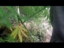 Житель Нижнегорского района оборудовал на территории своего домовладения теплицу для выращивания конопли