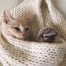Кот — самый верный друг! Он никому не расскажет, как ты ешь по ночам!