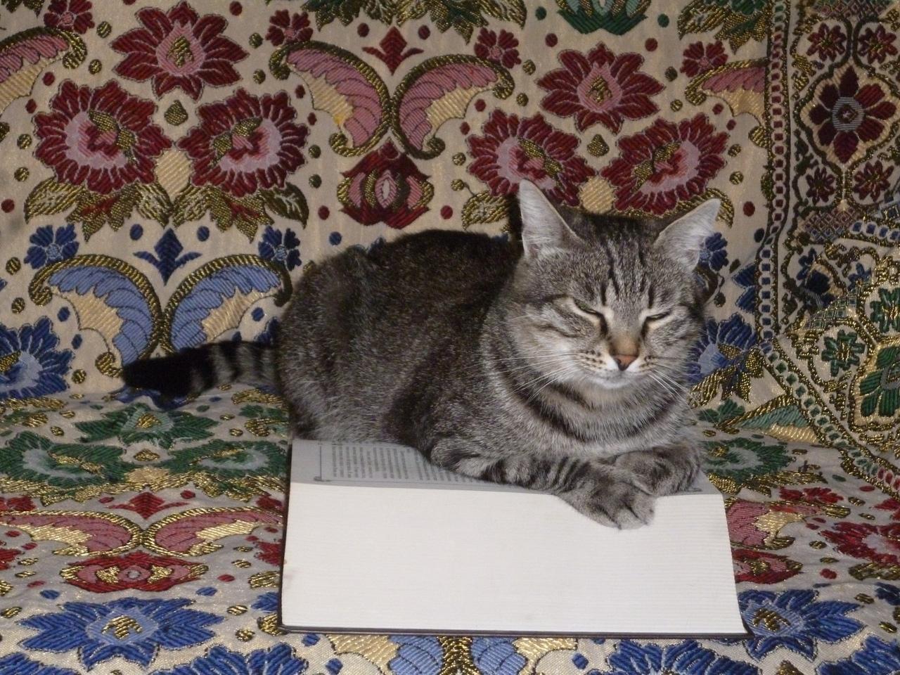 Книга оказалась не очень интересной.