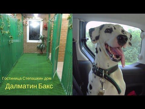 Далматин Бакс. Гостиница для собак Степашкин Дом.